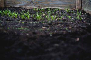Dirt in a garden.